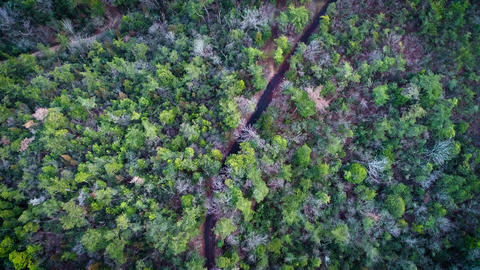 Person walking in the forest, seen from above the sky Filmmaterial