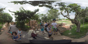 360 VR People visiting Valencia Bioparc and looking at giraffes Footage