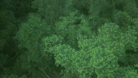 Aerial over tropical jungle forest 1 Footage