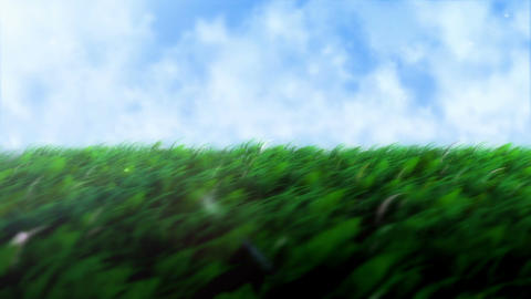 grass field Animation