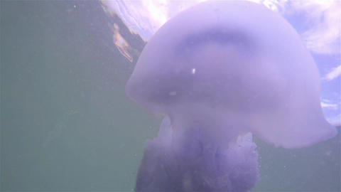 A large jellyfish floats in the clear sea at the bottom Footage
