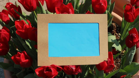 Flower photo frame12 Footage