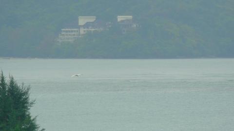 White Egret at Phuket Airport Footage
