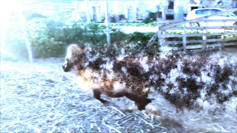 Special FX horses Footage
