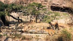 Tiger duel 01 Archivo