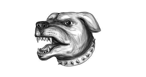 Aggressive Rottweiler Guard Dog Head 2D Animation Animation