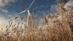 Slow motion slide over wheat with wind turbines Filmmaterial