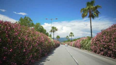 Driver's point of view, car driving along street with palms in resort city Footage