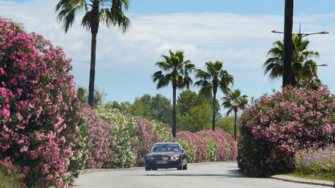 Luxury car driving in beautiful road with bushes and palms, arriving to villa Footage