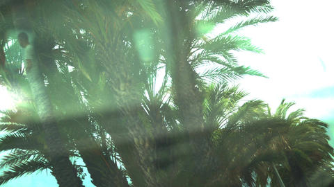 Pleasant memories of vacation and palms in resort town, creative sequence Footage