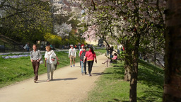 Spring park - flowering trees and people walking Footage