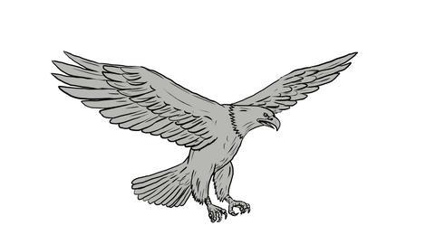 Bald Eagle Flying 2D Animation Animation