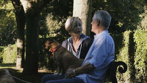 Retired Senior Couple sitting on bench in Park with dogs Footage