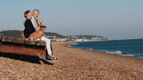 Retired Senior Couple sitting on jetty on beach with dogs Footage