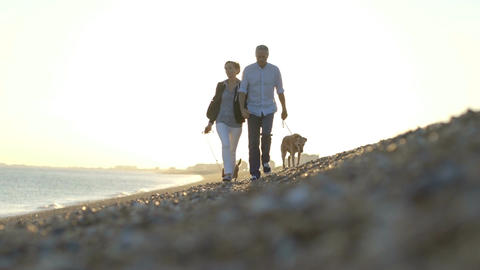 Retired Senior Couple walking on beach with dogs Footage
