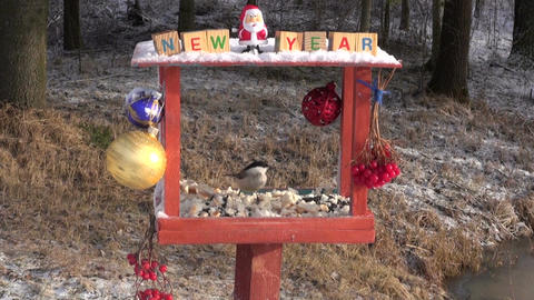 Christmas New Year decorated bird feeder and hungry birds Footage