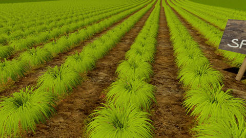 Green plant rows and wooden board No Spray Animation