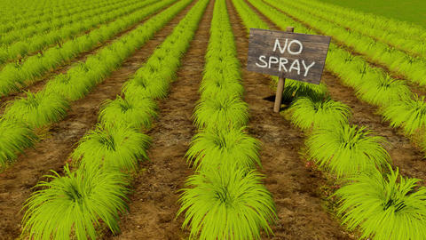 Wooden sign No Spray and green crops rows Animation