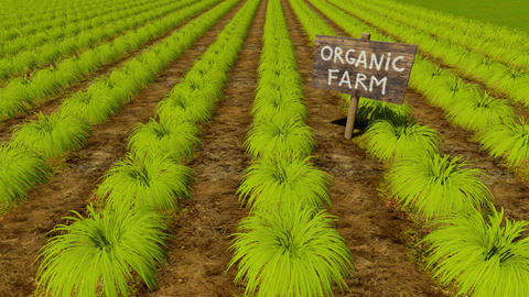Wooden sign Organic Farm and green crop rows Animation