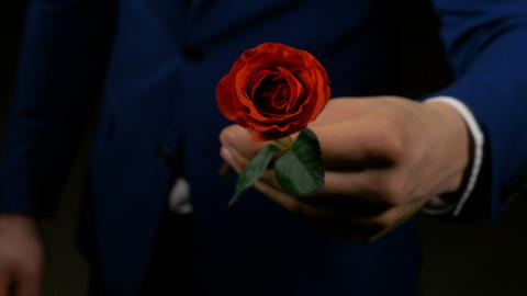 Boy hands out a rose as his valentine present for his lover Footage