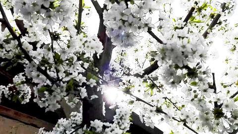 The Glare sun through branches Archivo