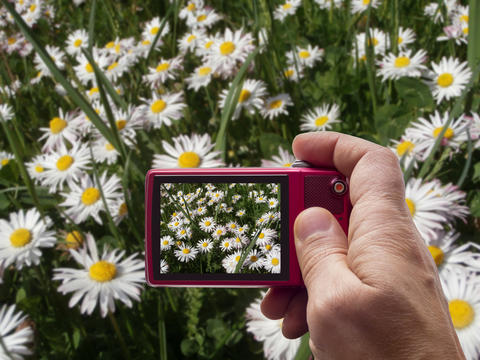 Meadow with daisies in camera viewfinder Photo