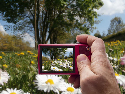 Meadow with daisies and dandelions in camera viewfinder Photo