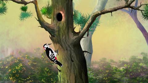 Woodpecker on a pine tree