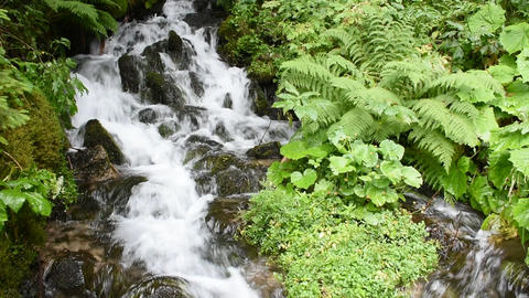 Mountain stream in forest environment running over mossy rocks. Steiermark, Aust Footage