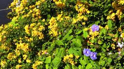 Wild flowers panning Footage