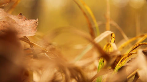 yellow grass Stock Video Footage