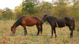wild horse Footage