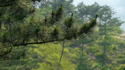pine trees,bushes in the wind,Dense swing tree,Hillside... Stock Video Footage