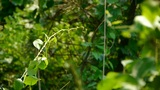 bushes in the wind,Dense swing tree,Hillside weeds & grass Footage
