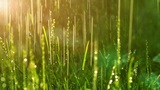 dew drops in lights on green grass Footage