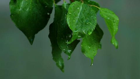 summer rain Stock Video Footage