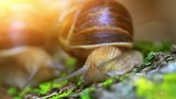 snail closeup in the rays of sun Footage