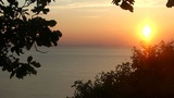sunset tree Footage