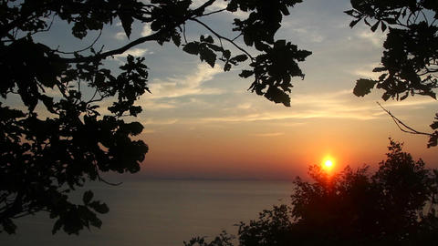 sunset tree Stock Video Footage