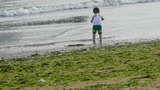 Child little boy play digging sand at beach.seaweed,seaweed,enteromorpha,tide,ti Footage