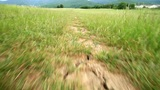 Walk Along The Path stock footage