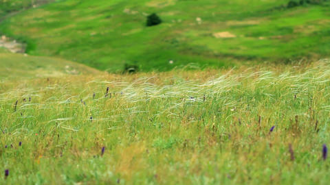 feather grass in the Crimean steppes Stock Video Footage