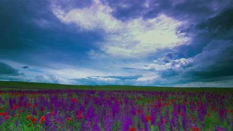 meadow sage and timelapse clouds Stock Video Footage