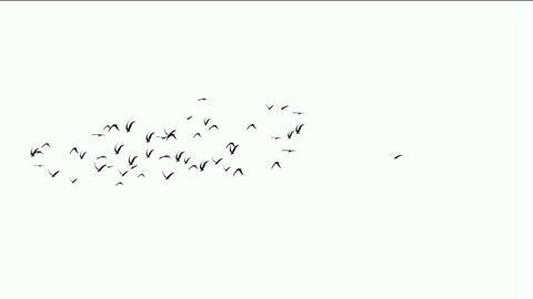 flock of pigeons birds fly over,migratory birds Stock Video Footage