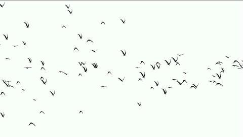 flock of birds fly over,migratory birds Stock Video Footage