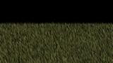 grassland Animation