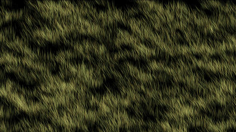 wind blow grass Stock Video Footage