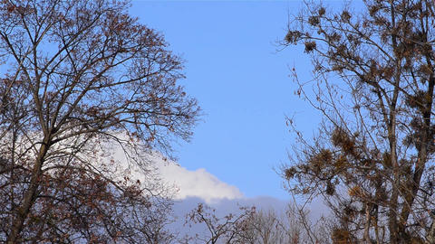 White clouds above a leafless forests Footage