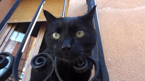 Curious cat sitting on the balcony with his head out through the bars Footage