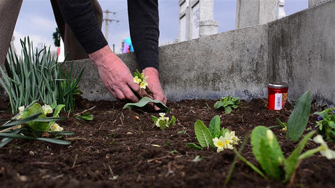 Man planted flowers on the grave of relatives of his and red candle is lit 3 Footage